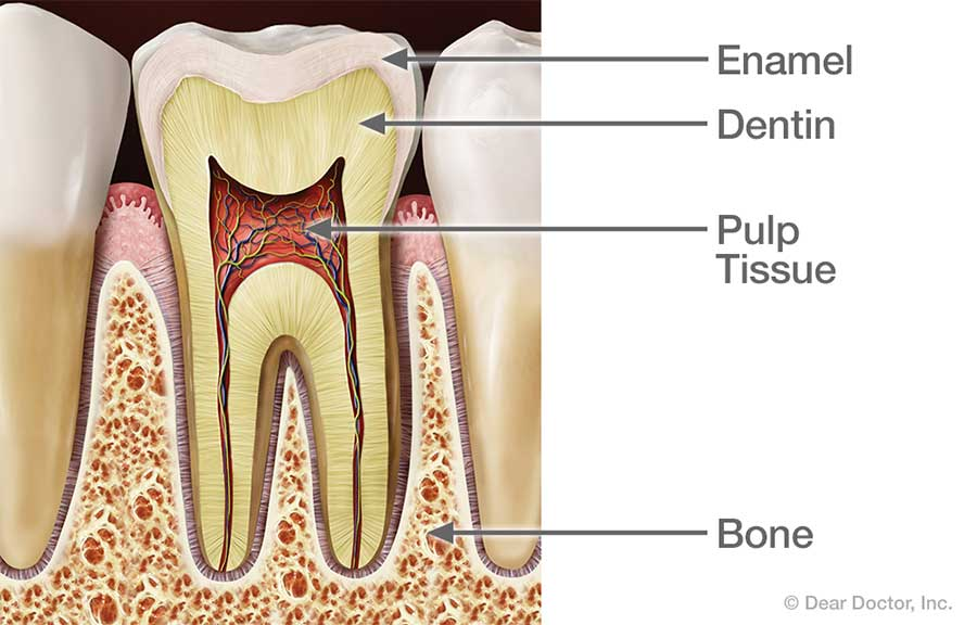 Healthy Tooth.