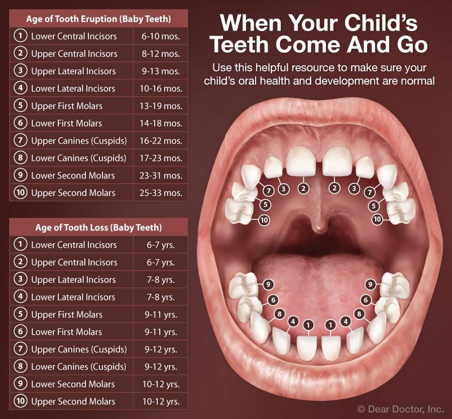 Kids mouth anatomy.