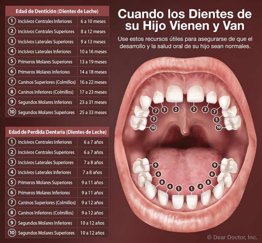 Edad de Dentición.